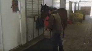 馬体重計測